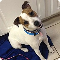 Adopt A Pet :: Kennedy in Houston - Houston, TX