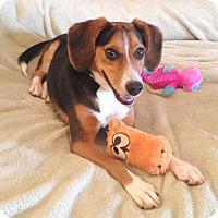 Adopt A Pet :: Ella - Homewood, AL