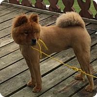 Adopt A Pet :: Leyla - Tillsonburg, ON