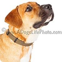 Adopt A Pet :: Jack - Scottsdale, AZ