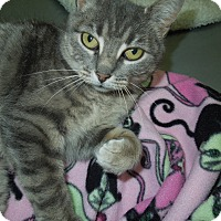 Adopt A Pet :: Star - Medina, OH