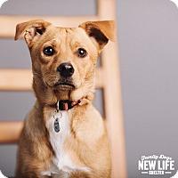 Adopt A Pet :: Al - Portland, OR