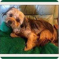Adopt A Pet :: Jake - Rancho Cucamonga, CA
