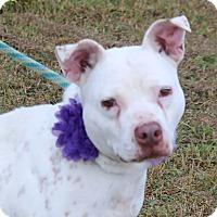 Adopt A Pet :: Mona - Lacey, WA