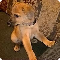 Adopt A Pet :: Rick - Kyle, TX