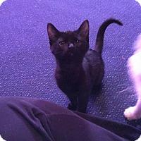 Adopt A Pet :: Thunder - Lewistown, PA