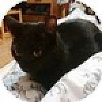 Adopt A Pet :: Diocletian - Vancouver, BC