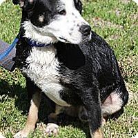 Adopt A Pet :: Trip - Sylvania, GA
