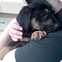 Adopt A Pet :: Zane - Brooklyn, NY