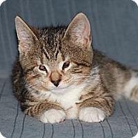 Adopt A Pet :: Hunny (JT) - Little Falls, NJ