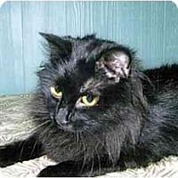 Adopt A Pet :: Callie - Medway, MA