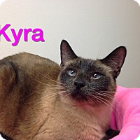 Adopt A Pet :: Kyra - Foothill Ranch, CA