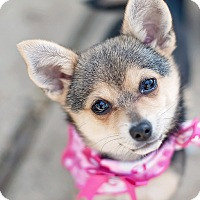 Adopt A Pet :: Bandita - Kingwood, TX