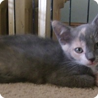 Adopt A Pet :: LOUICA - Acme, PA