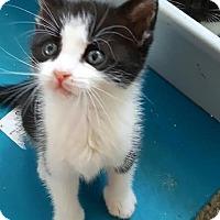 Adopt A Pet :: Princess - East Brunswick, NJ