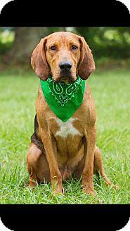 Hound (Unknown Type) Mix Dog for adoption in Broken Arrow, Oklahoma - Huck