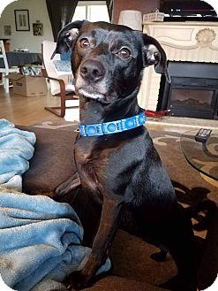 Chihuahua Mix Dog for adoption in Salem, Oregon - Mynx
