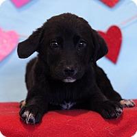 Adopt A Pet :: Xixi - Waldorf, MD