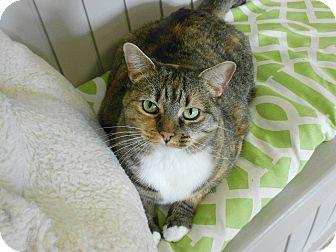 Domestic Shorthair Cat for adoption in Chesapeake, Virginia - Moonbeam