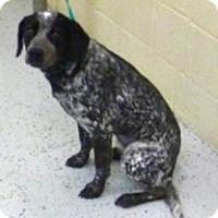 Adopt A Pet :: Josie - Avon, NY