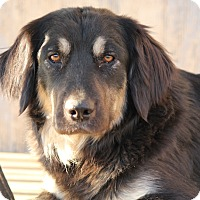 Adopt A Pet :: Willow - Westport, CT
