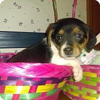 Adopt A Pet :: Maizie - Cincinnati, OH