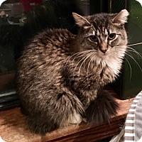 Adopt A Pet :: Hazel - Bedford Hills, NY