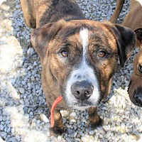 Adopt A Pet :: Cooter - Fort Madison, IA