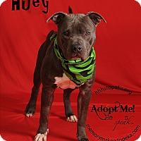Adopt A Pet :: Huey - Topeka, KS