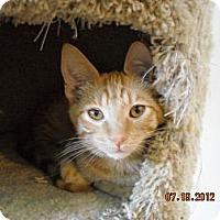 Adopt A Pet :: Parker - Riverside, RI