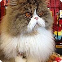 Adopt A Pet :: Kisses - Beverly Hills, CA