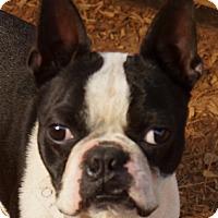 Adopt A Pet :: PANDA - North Augusta, SC