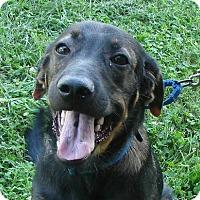 Adopt A Pet :: Wilson - Erwin, TN