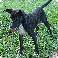 Adopt A Pet :: Gretchen - Marietta, GA