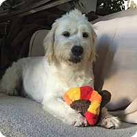 Adopt A Pet :: Miracle - Orlando, FL