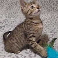 Adopt A Pet :: Jody - Rosamond, CA