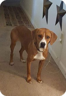 Hound (Unknown Type) Mix Dog for adoption in Chesterfield, Virginia - Link
