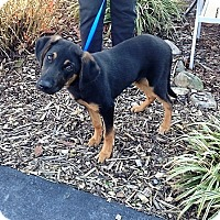 Adopt A Pet :: Branik - Greeneville, TN