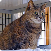Adopt A Pet :: Azula - Victor, NY