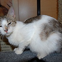 Adopt A Pet :: Connie - Whittier, CA