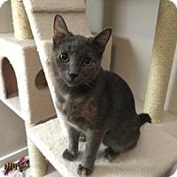 Adopt A Pet :: zzViolet - Dallas, TX