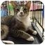 Photo 2 - Domestic Shorthair Cat for adoption in Orlando, Florida - Hope