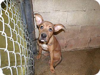 Terrier (Unknown Type, Medium) Mix Dog for adoption in Rocky Mount, North Carolina - Finn