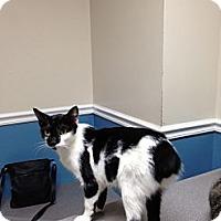 Adopt A Pet :: Brenna - Monroe, GA