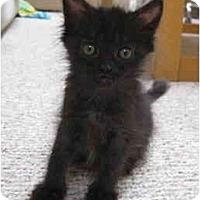 Adopt A Pet :: Peaches - Davis, CA