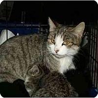 Adopt A Pet :: Momma - Sierra Vista, AZ