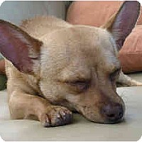 Adopt A Pet :: Ethan - Scottsdale, AZ