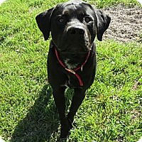 Adopt A Pet :: Cinders - Geneseo, IL