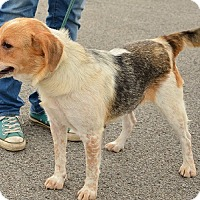 Adopt A Pet :: Andi - Hamilton, ON
