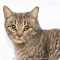 Adopt A Pet :: Muffy - Fountain Hills, AZ
